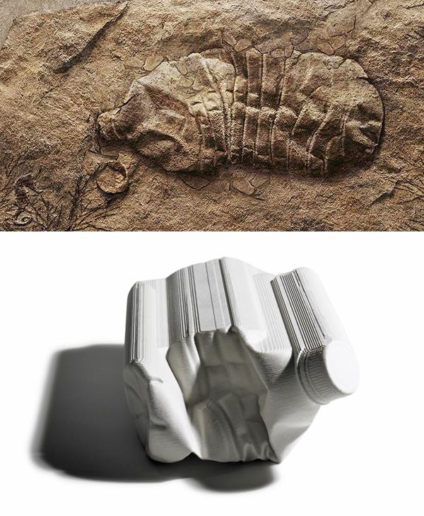 Fossil-Bottles