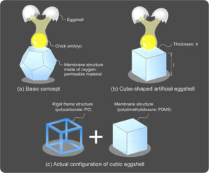 Egg-in-Cube: Design and Fabrication of a Novel Artificial Eggshell with Functionalized Surface